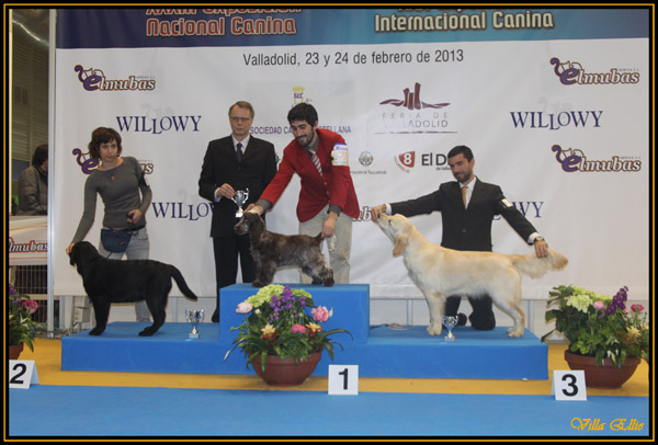 dog show valladolid golden retriever villa ellie maggie may